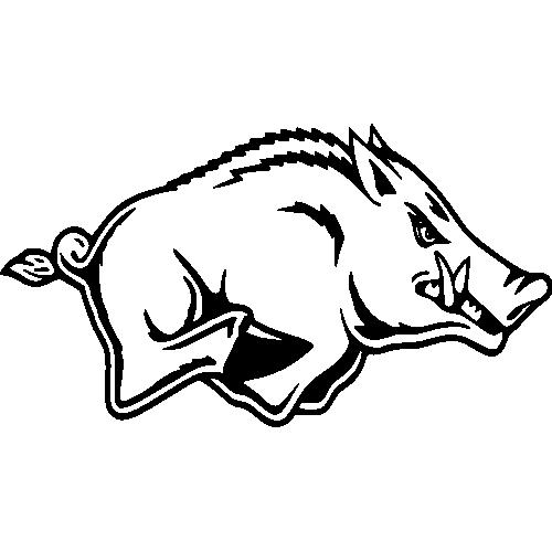 Tête de Sanglier